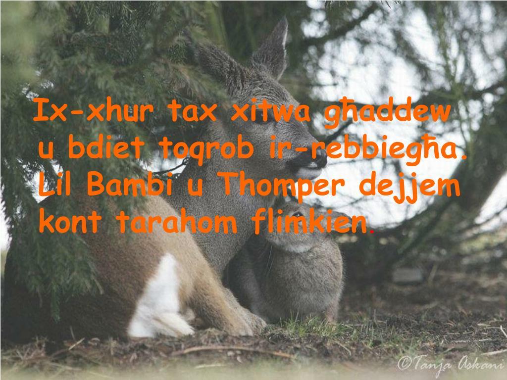 Ix-xhur tax xitwa għaddew u bdiet toqrob ir-rebbiegħa. Lil Bambi u Thomper dejjem kont tarahom flimkien