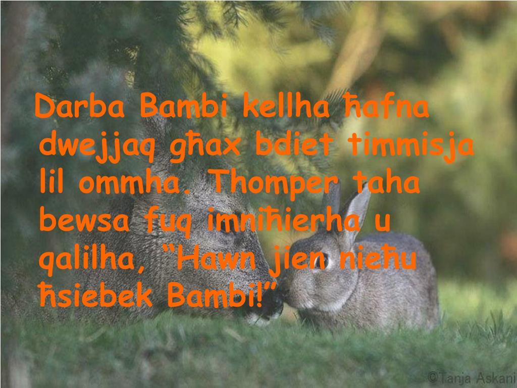 """Darba Bambi kellha ħafna dwejjaq għax bdiet timmisja lil ommha. Thomper taha bewsa fuq imniħierha u qalilha, """"Hawn jien nieħu ħsiebek Bambi!"""""""