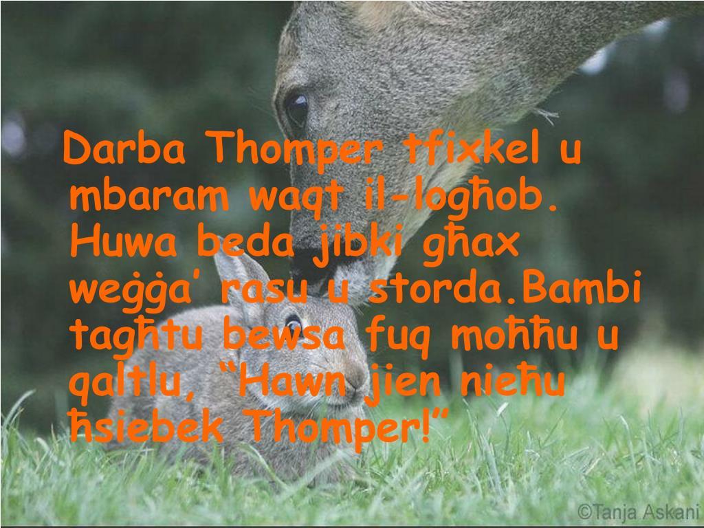 """Darba Thomper tfixkel u mbaram waqt il-logħob. Huwa beda jibki għax weġġa' rasu u storda.Bambi tagħtu bewsa fuq moħħu u qaltlu, """"Hawn jien nieħu ħsiebek Thomper!"""""""
