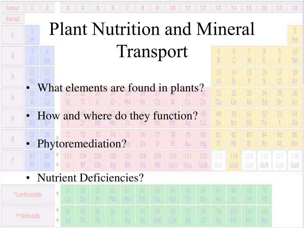Plant Nutrition and Mineral Transport