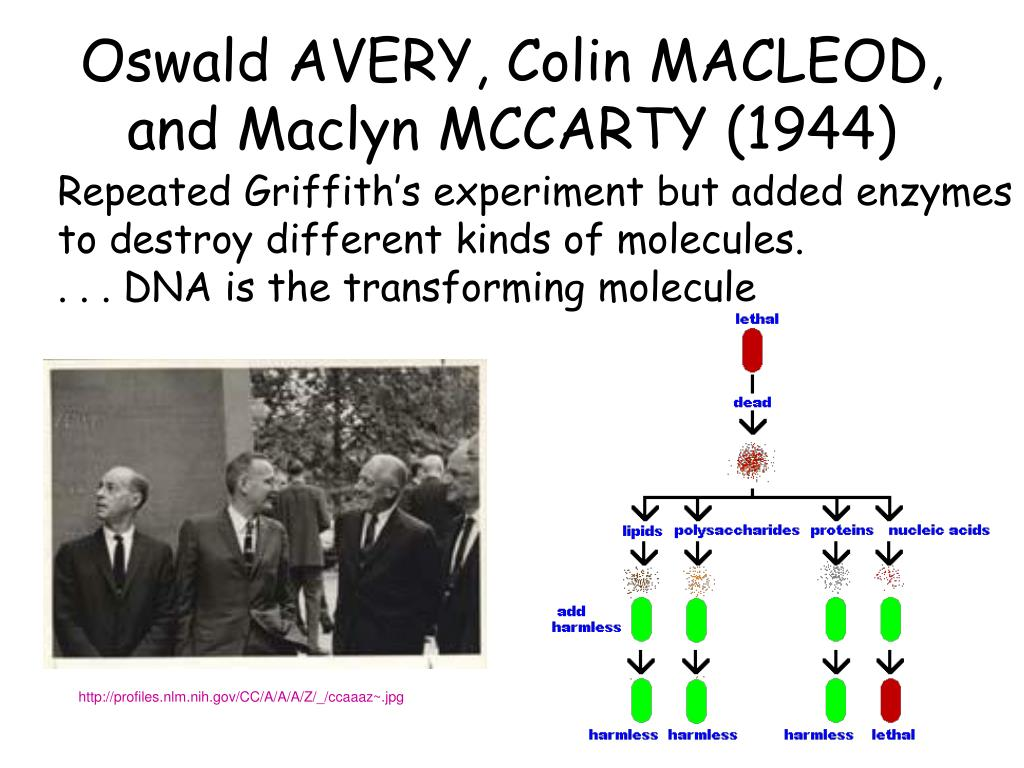 Oswald AVERY, Colin MACLEOD, and Maclyn MCCARTY (1944)