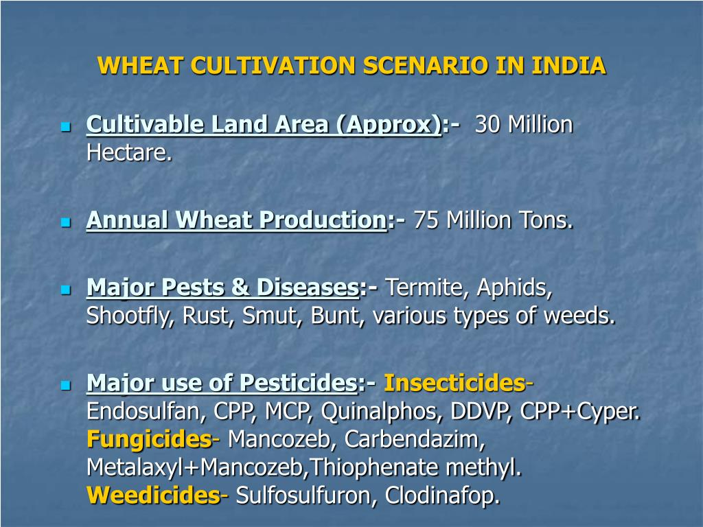 WHEAT CULTIVATION SCENARIO IN INDIA