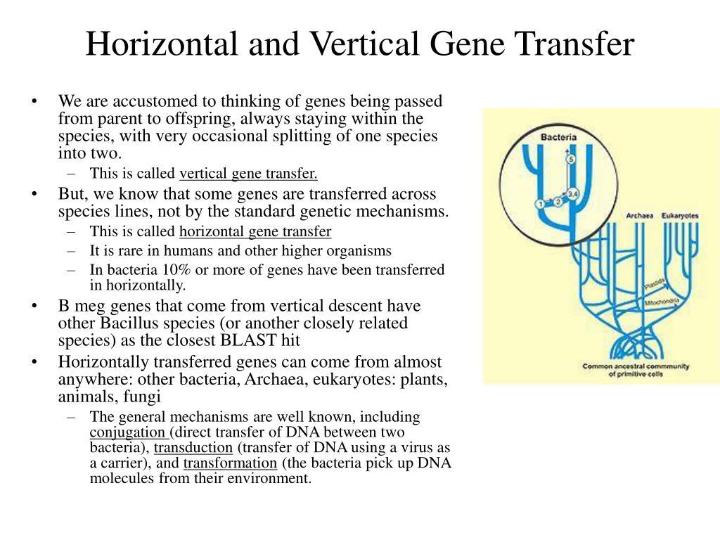 Horizontal and Vertical Gene Transfer