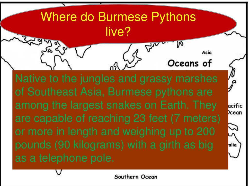 Where do Burmese Pythons live?