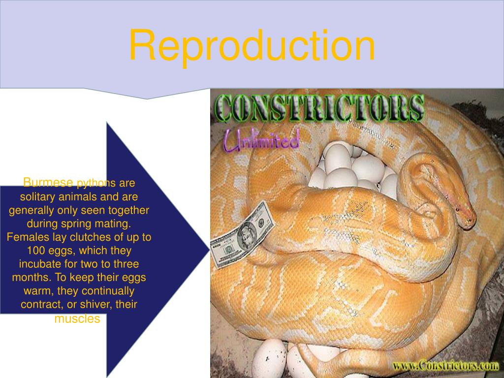 Reproduction