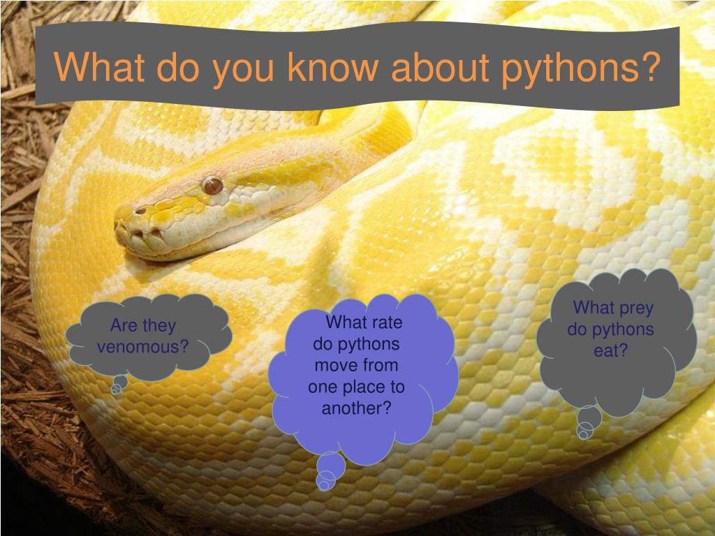 What do you know about pythons?