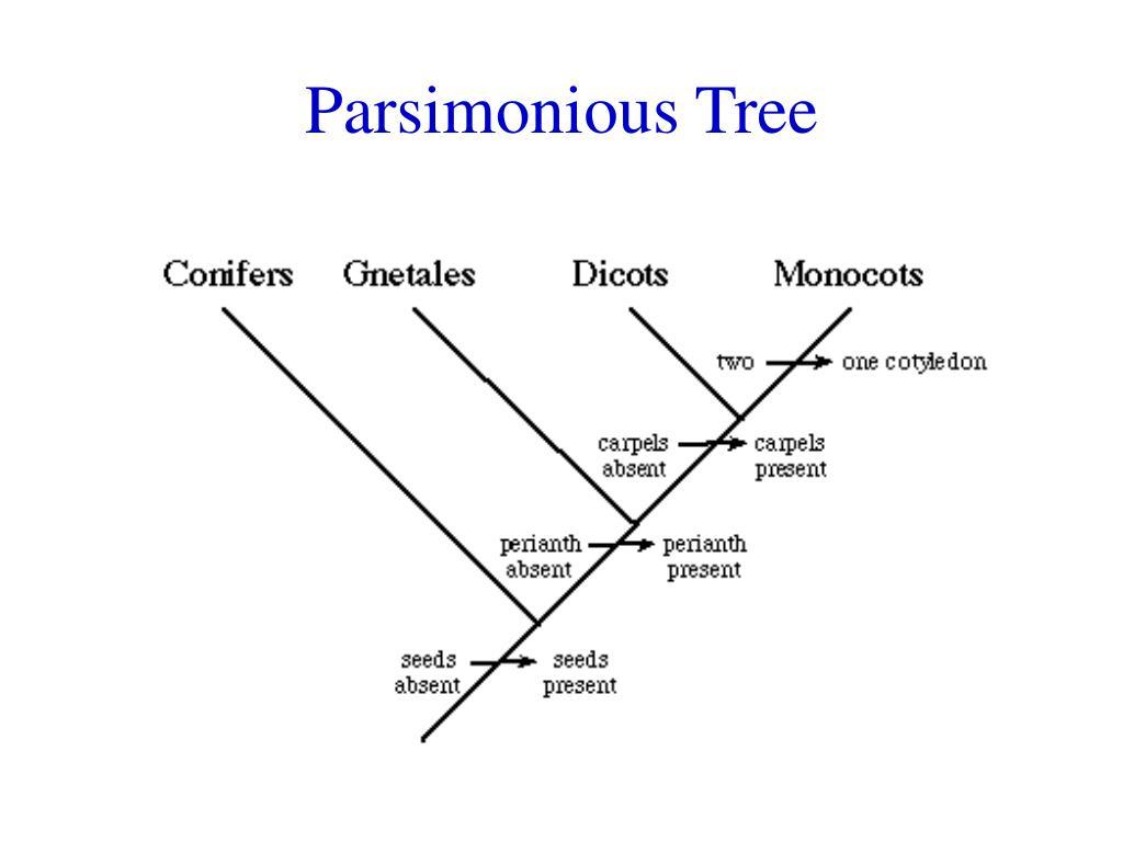 Parsimonious Tree