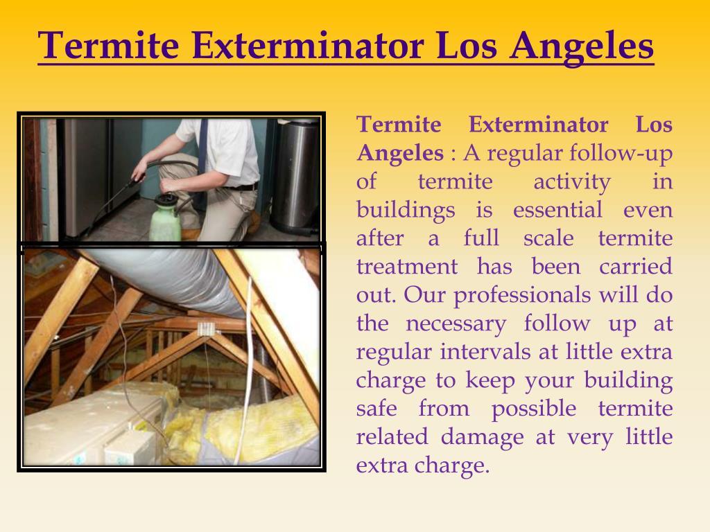 Termite Exterminator Los Angeles