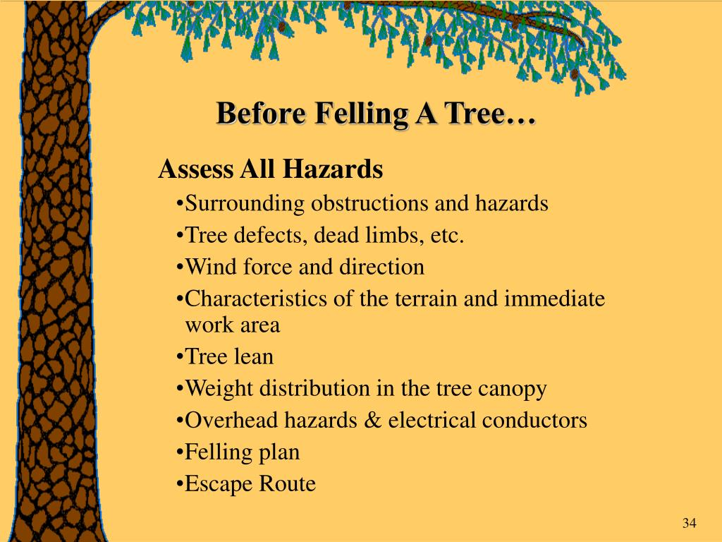 Before Felling A Tree…