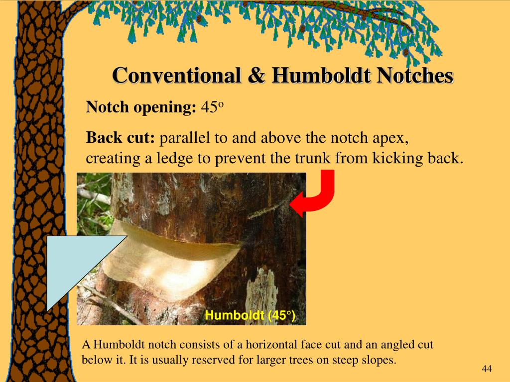 Conventional & Humboldt Notches