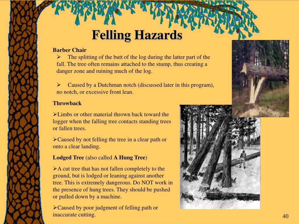 Felling Hazards