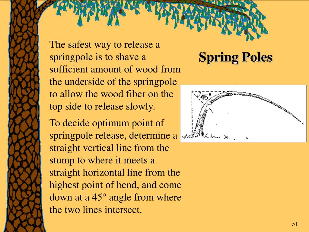 The safest way to release a springpole is to shave a sufficient amount of wood from the underside of the springpole to allow the wood fiber on the top side to release slowly.