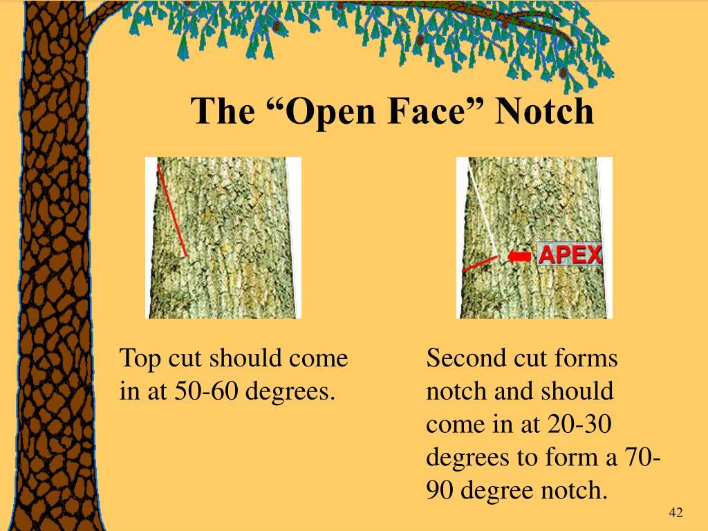 "The ""Open Face"" Notch"