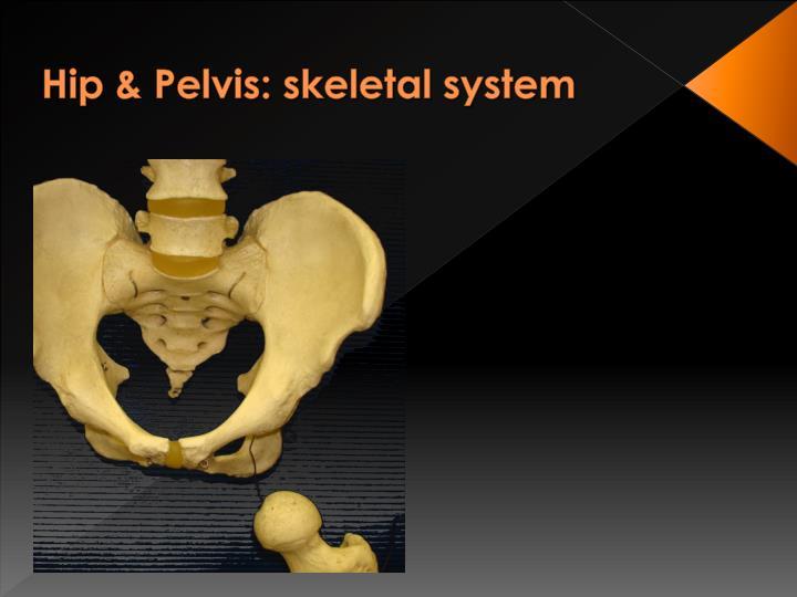 Hip & Pelvis: skeletal system