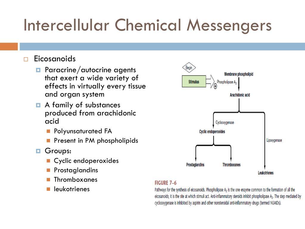 Intercellular Chemical Messengers