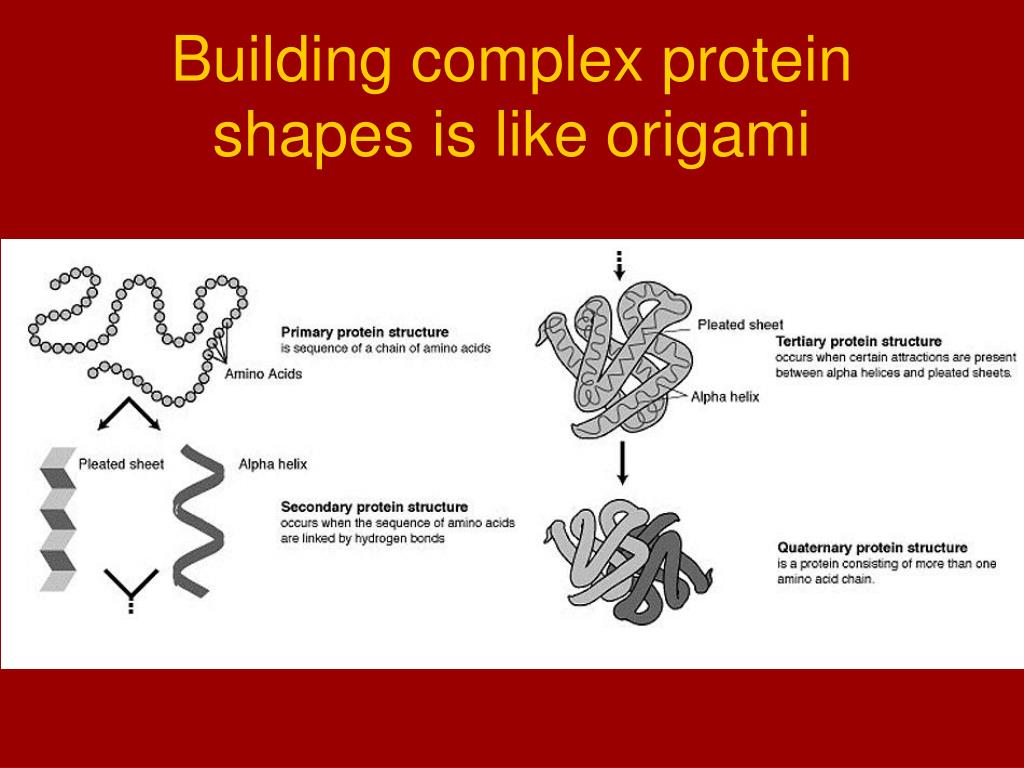 Building complex protein shapes is like origami