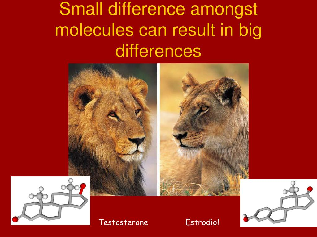 Small difference amongst molecules can result in big differences