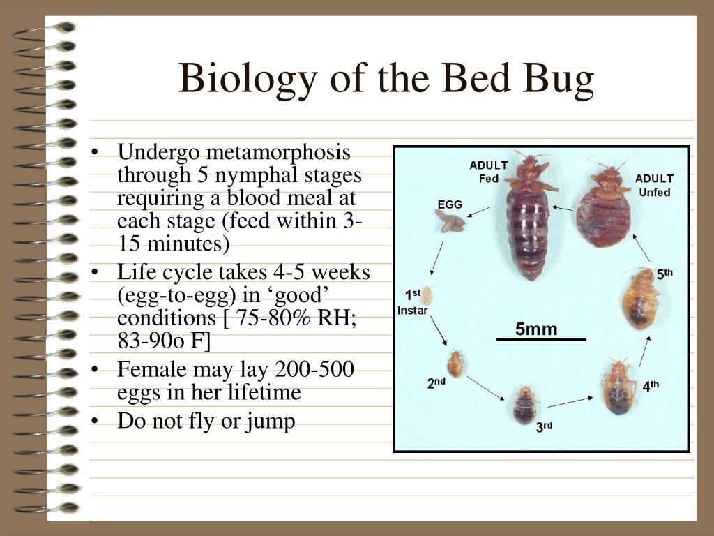 Biology of the Bed Bug