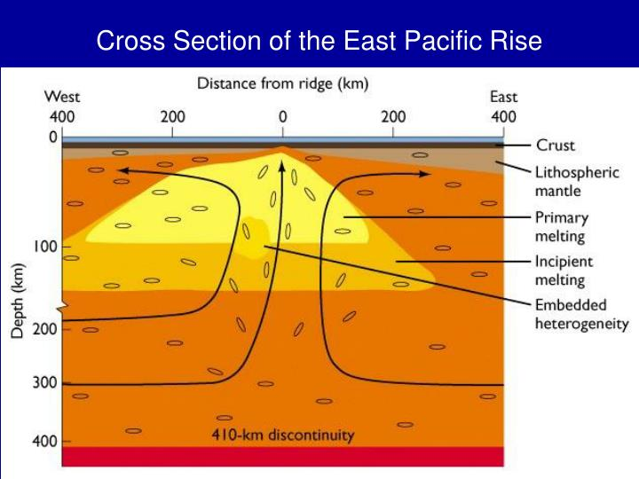 Cross section of the east pacific rise l.jpg