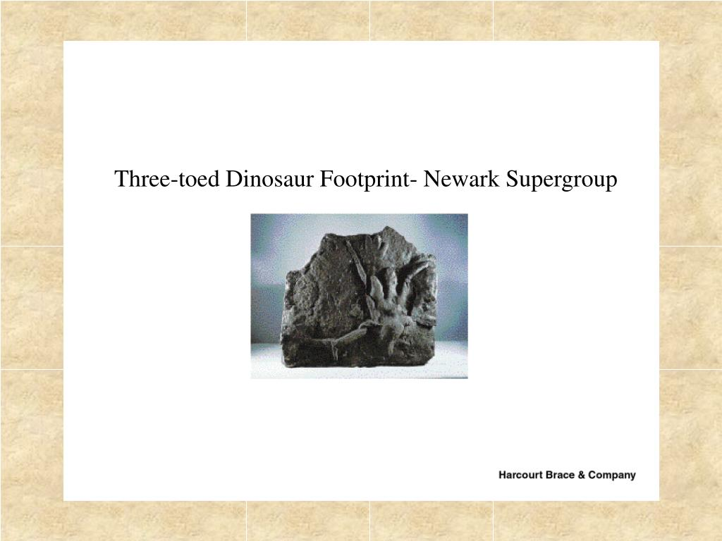 Three-toed Dinosaur Footprint- Newark Supergroup