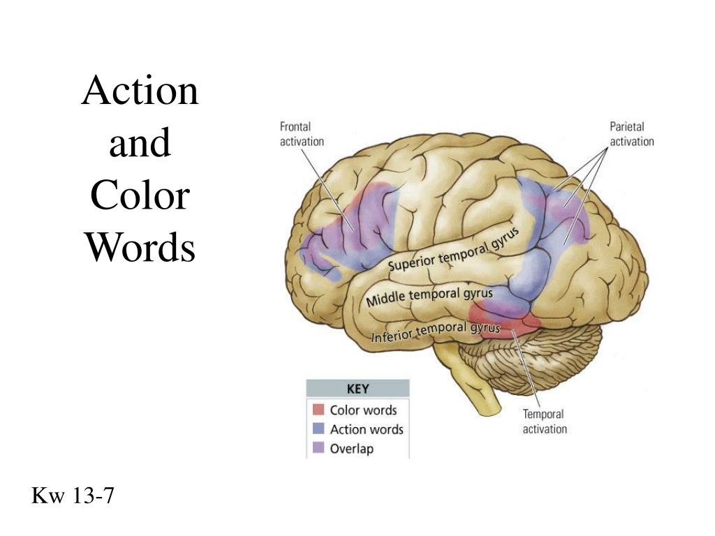 Action and Color Words