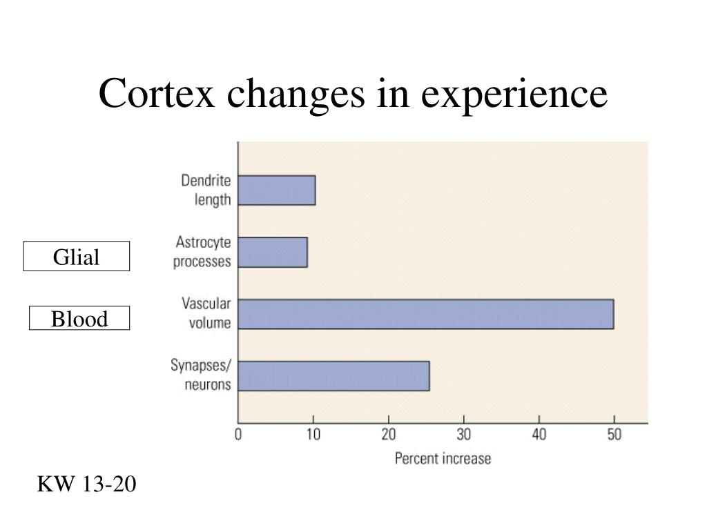 Cortex changes in experience