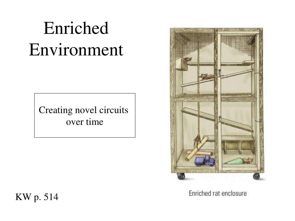 Enriched Environment