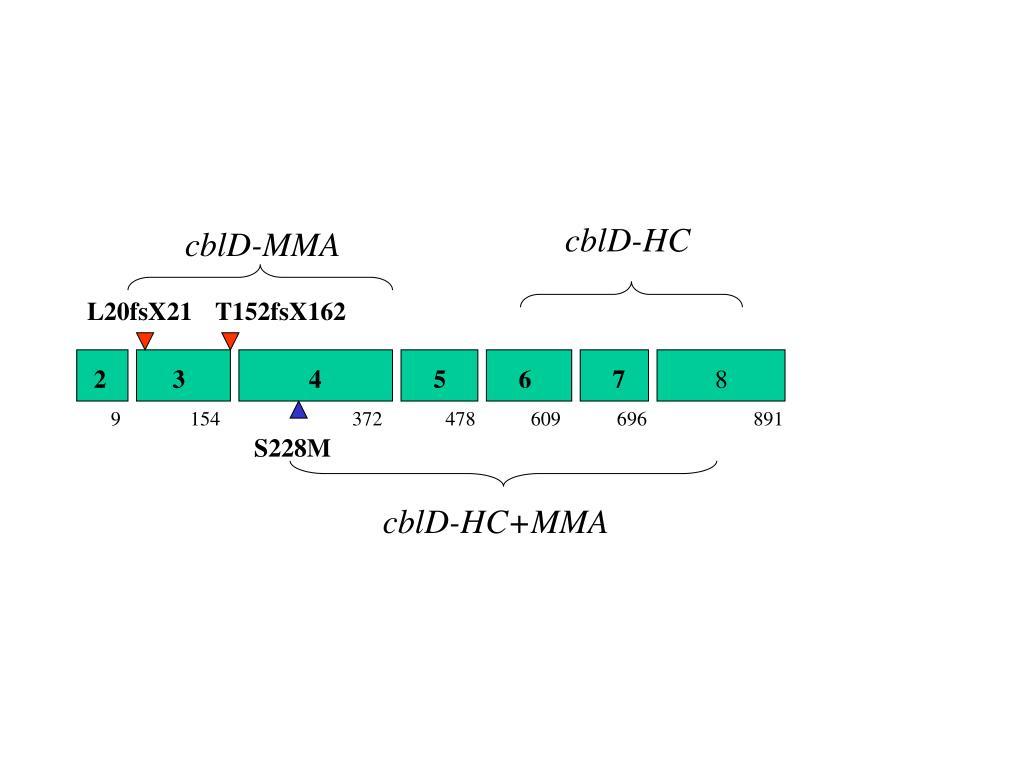 cblD-HC