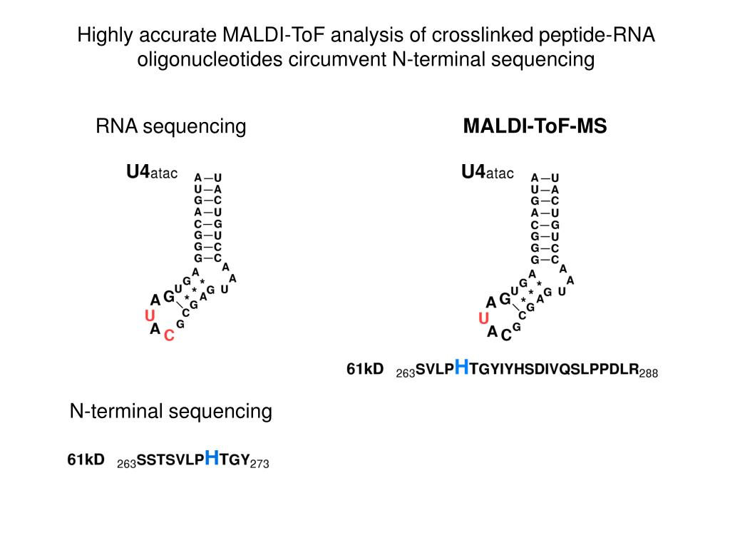 Highly accurate MALDI-ToF analysis of crosslinked peptide-RNA