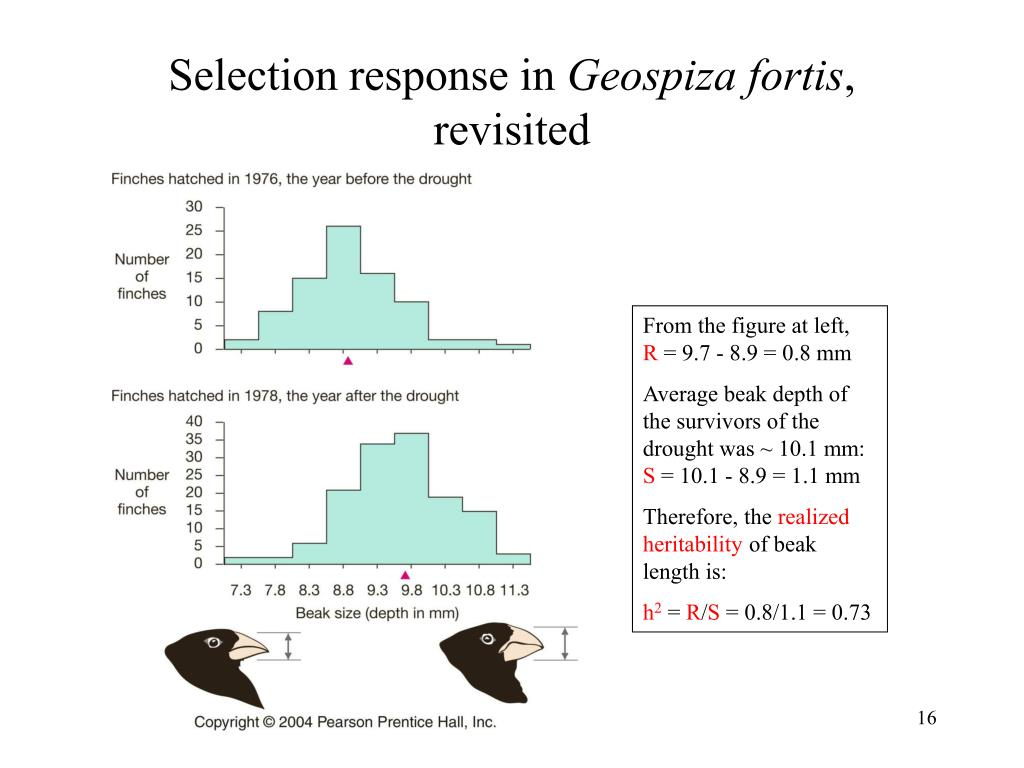 Selection response in