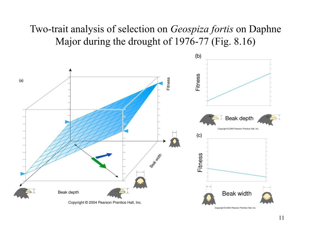 Two-trait analysis of selection on