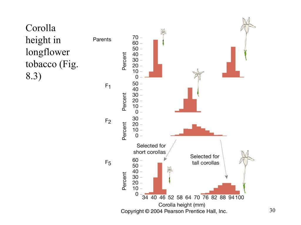 Corolla height in longflower tobacco (Fig. 8.3)