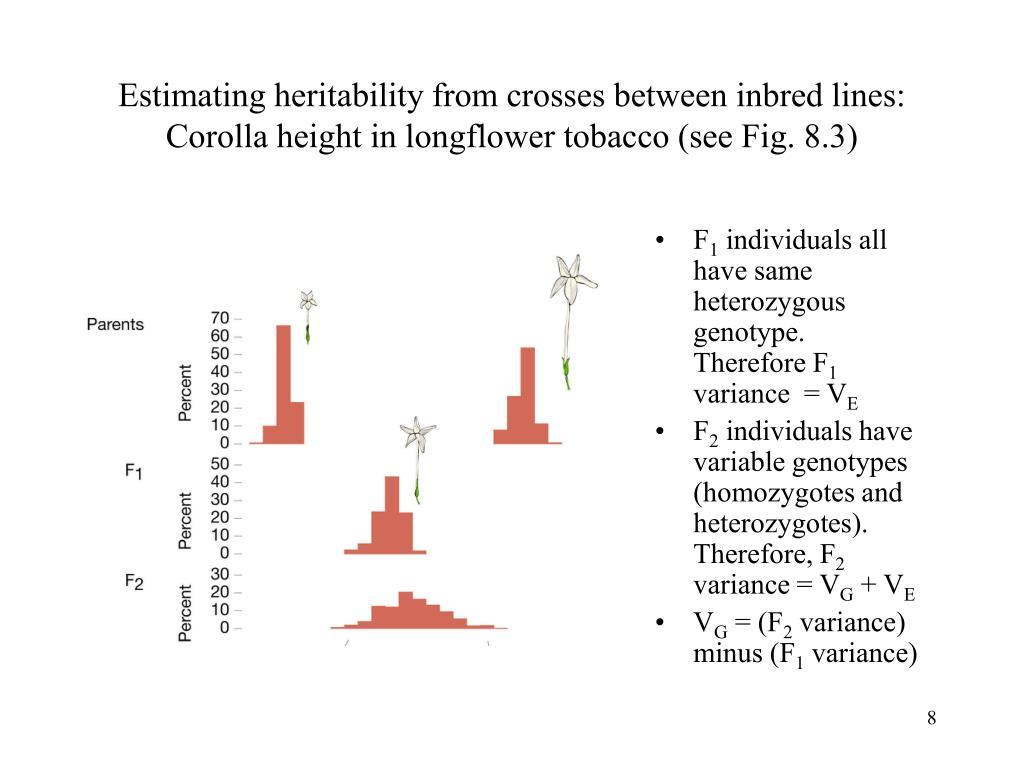 Estimating heritability from crosses between inbred lines: