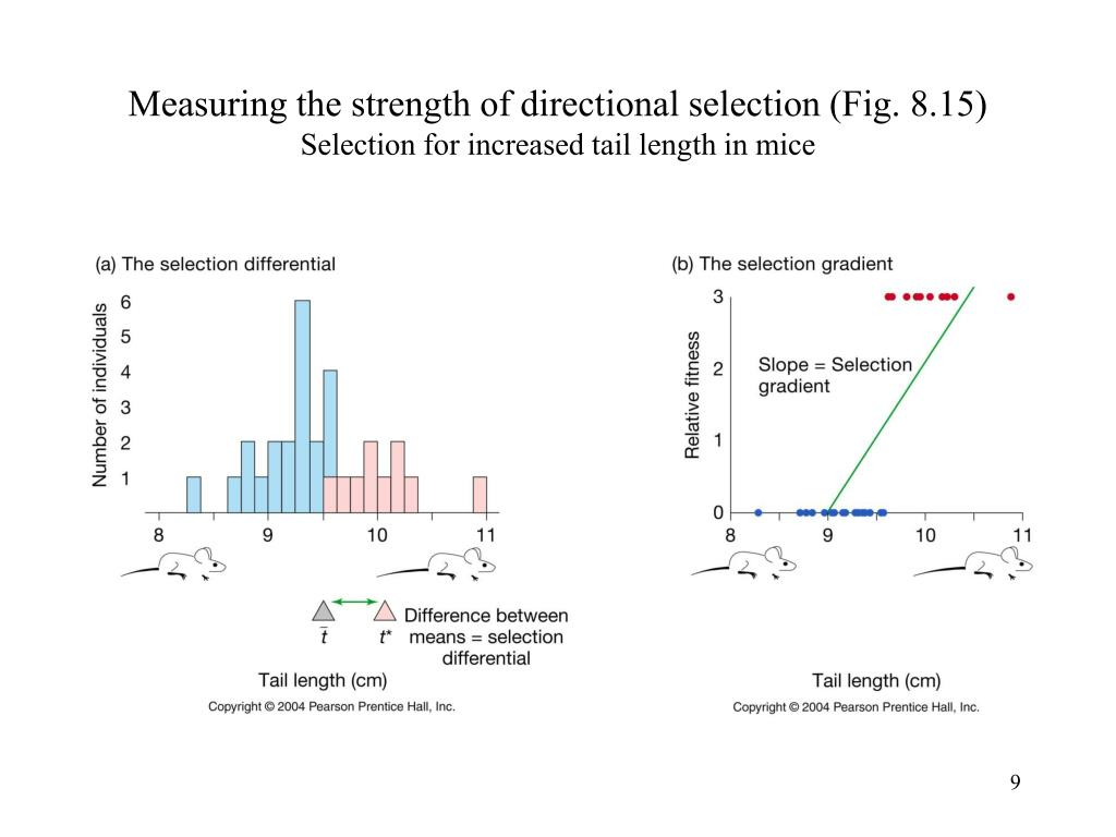 Measuring the strength of directional selection (Fig. 8.15)
