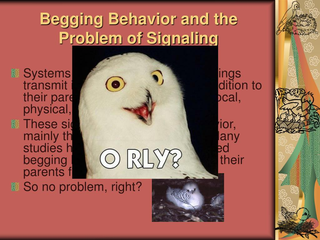 Begging Behavior and the Problem of Signaling