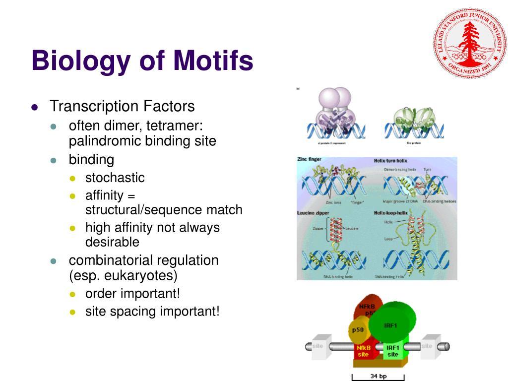 Biology of Motifs