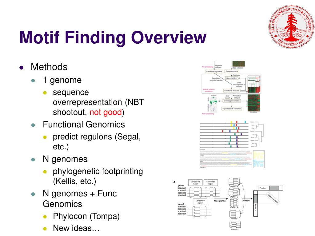 Motif Finding Overview
