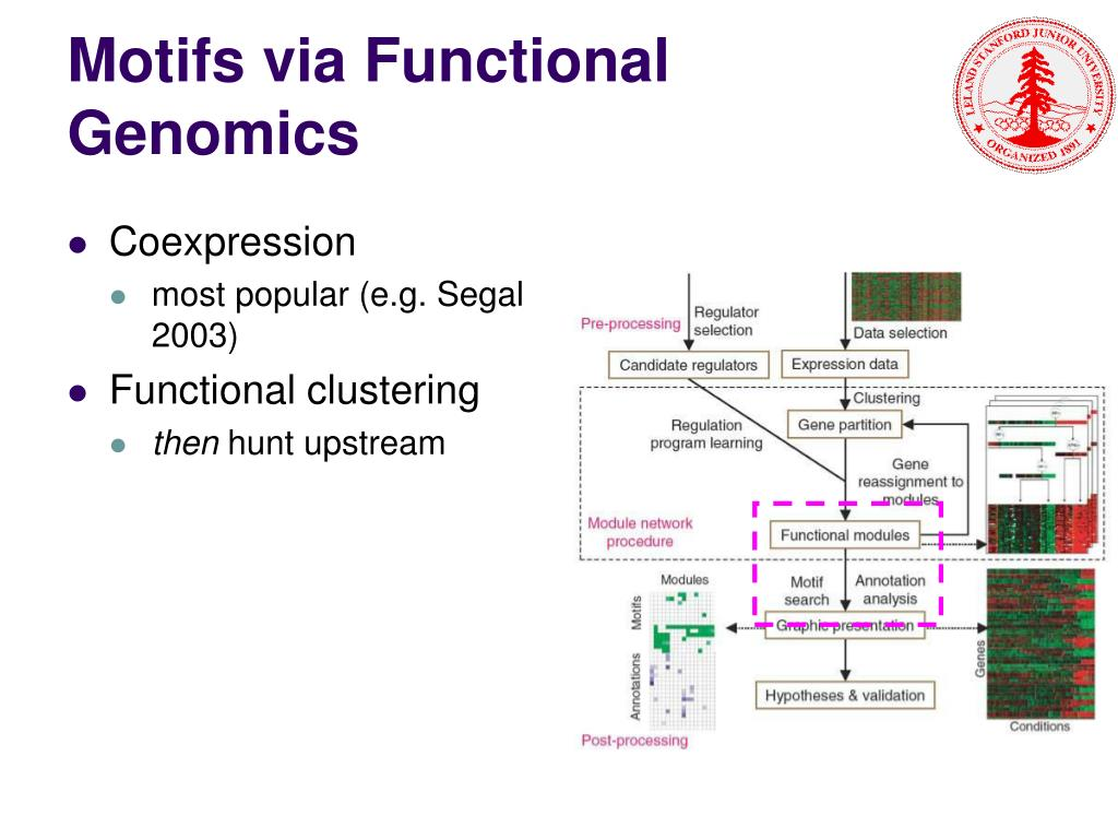 Motifs via Functional Genomics