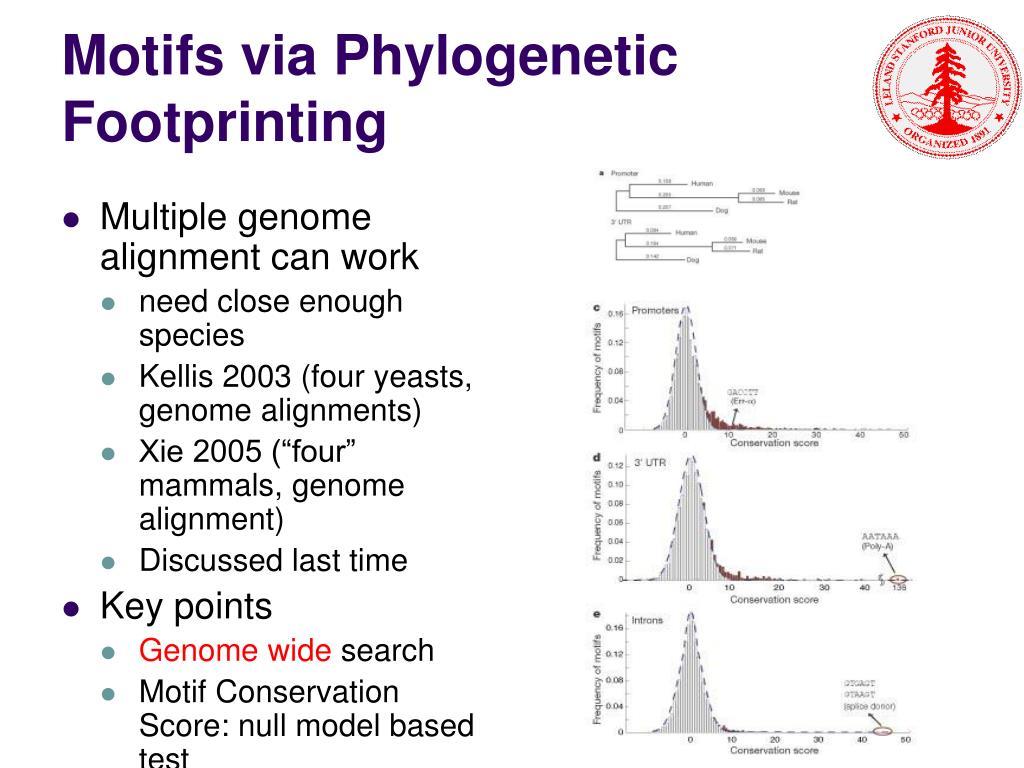 Motifs via Phylogenetic Footprinting