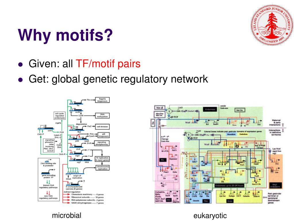 Why motifs?