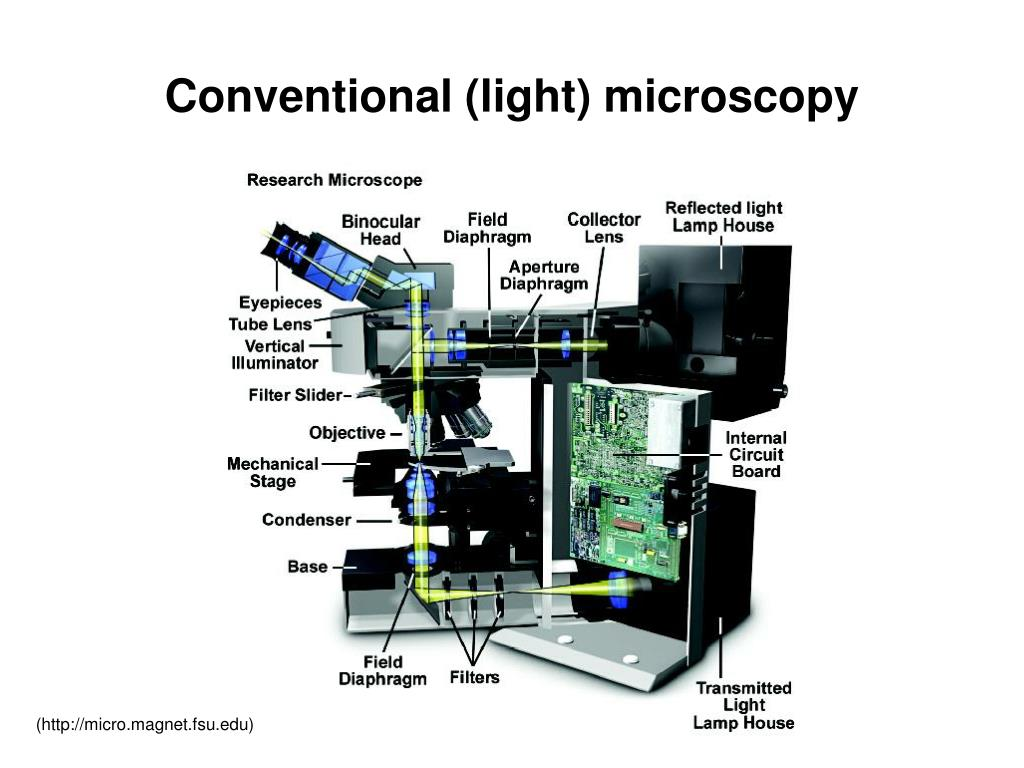 Conventional (light) microscopy