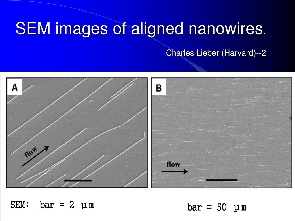 SEM images of aligned nanowires