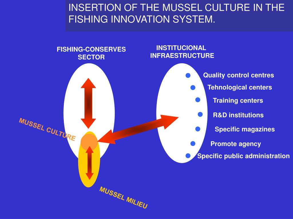 INSERTION OF THE MUSSEL CULTURE IN THE FISHING INNOVATION SYSTEM.