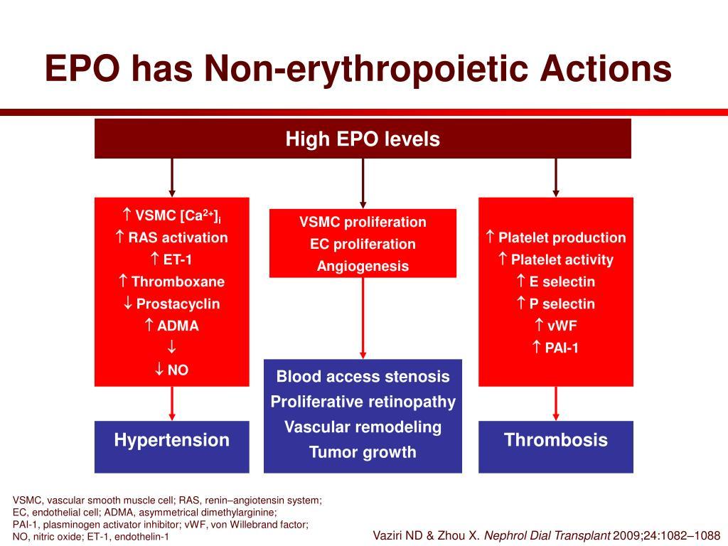 EPO has Non-erythropoietic Actions