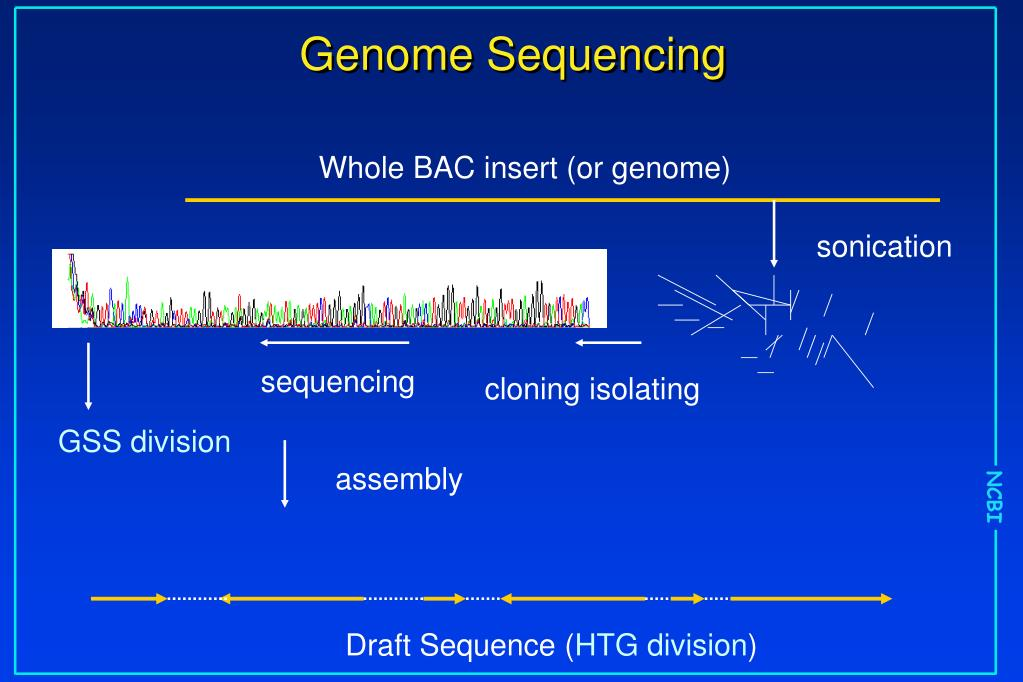 Whole BAC insert (or genome)