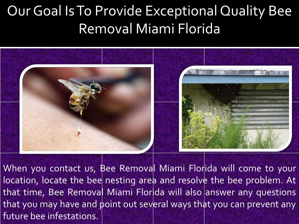 Our Goal Is To Provide Exceptional Quality Bee Removal Miami Florida