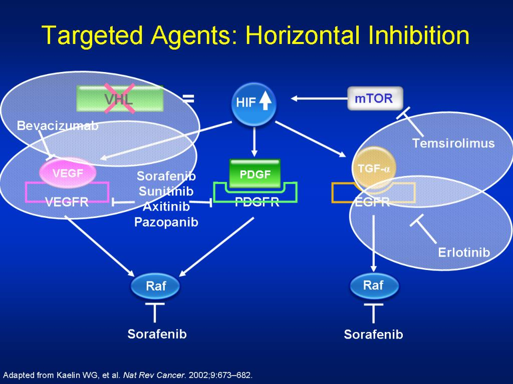 Targeted Agents: Horizontal Inhibition