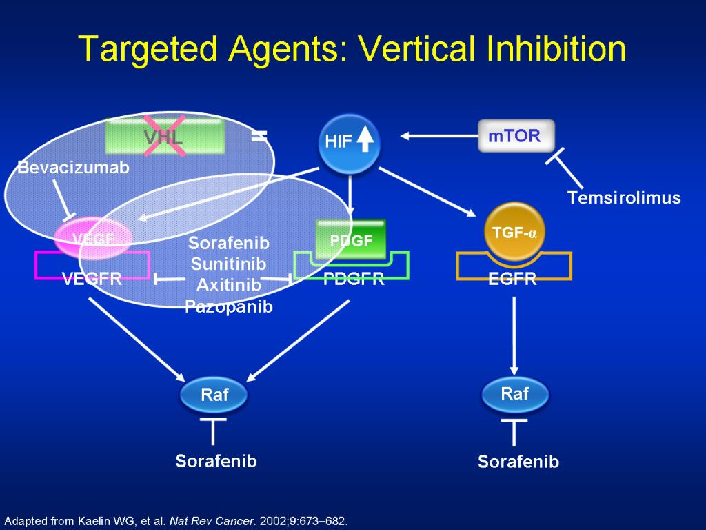 Targeted Agents: Vertical Inhibition