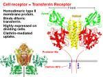 cell receptor transferrin receptor