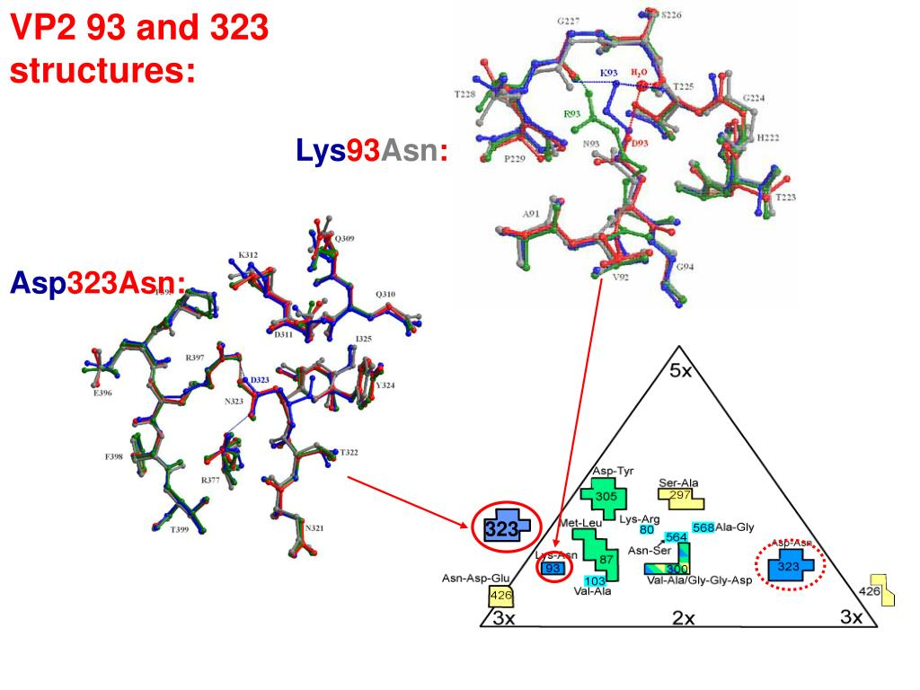 VP2 93 and 323 structures: